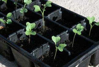 Ready to Start a Vegetable Garden?